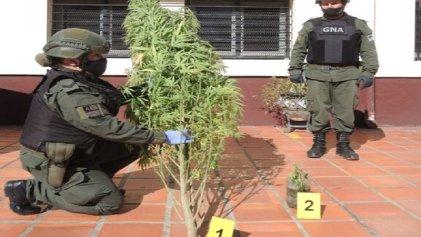 """Cannabis: Kulfas hace un """"congreso"""" con CEOs, Frederic y Berni te encanan por una planta"""